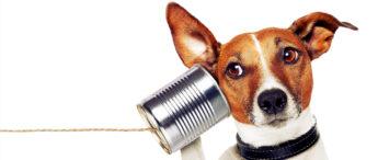 VCE EAL: Preparing for listening comprehension